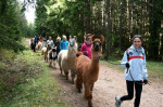 Course weekend about llama and alpaca Oct 14